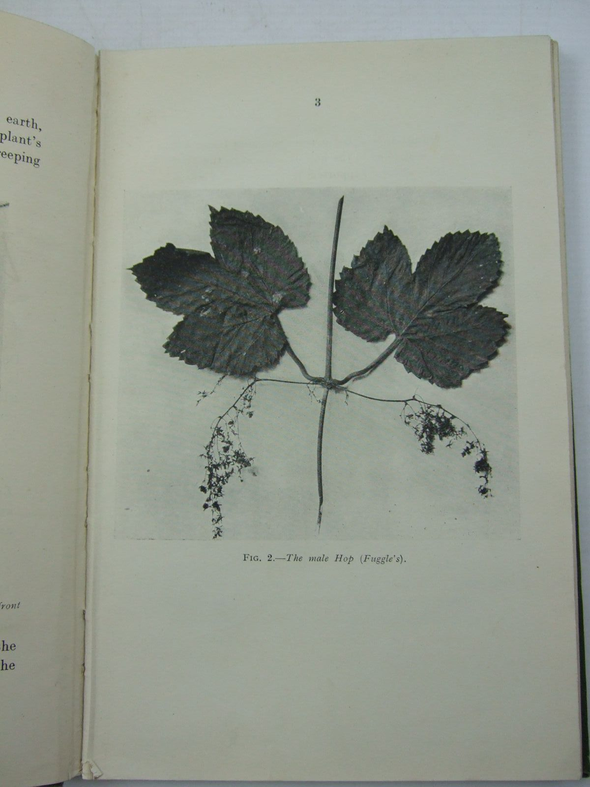 Photo of ENGLISH HOPS written by Clinch, George published by McCorquodale & Co. Ltd. (STOCK CODE: 2109442)  for sale by Stella & Rose's Books