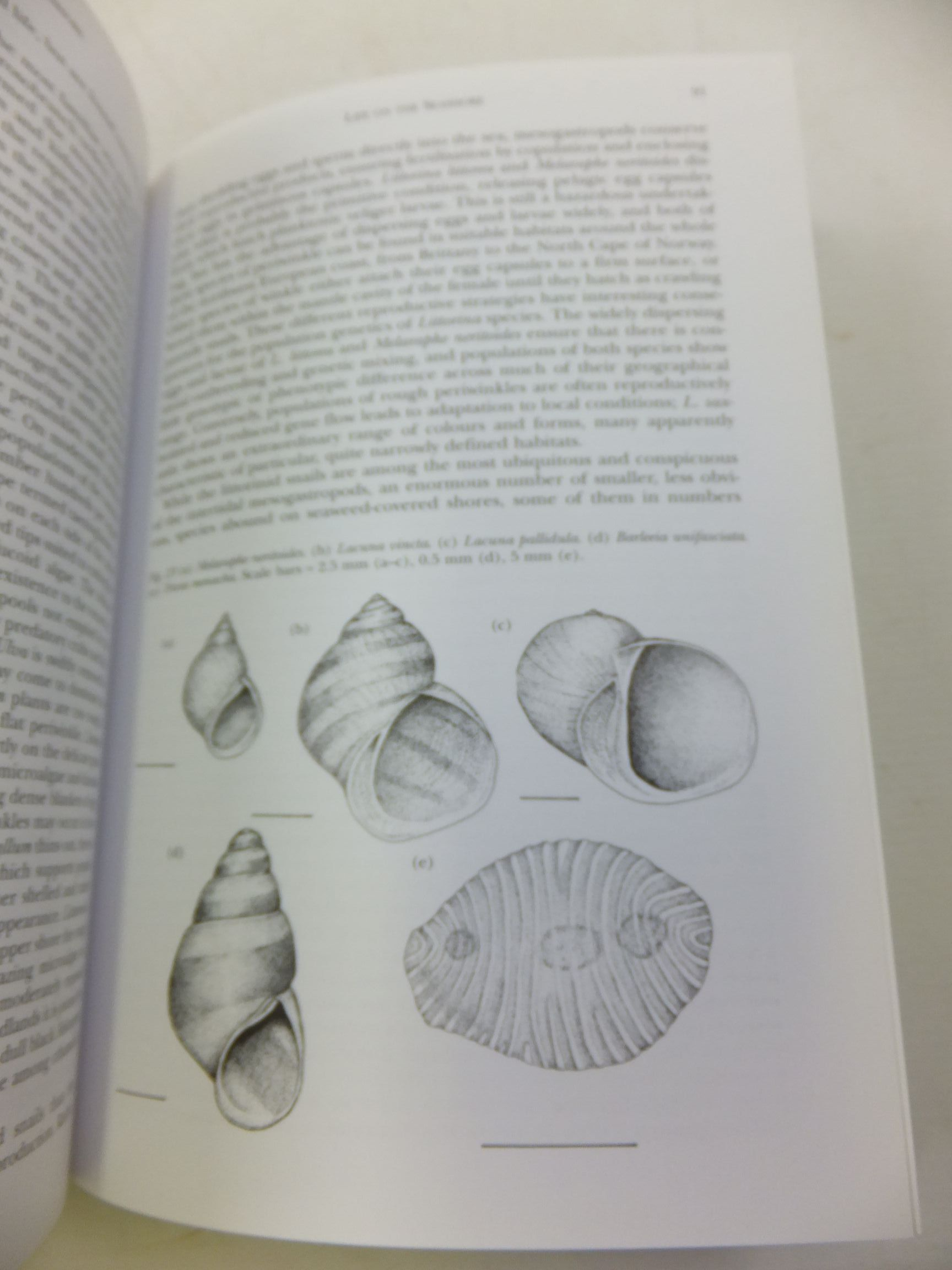 Photo of A NATURAL HISTORY OF THE SEASHORE (NN 94) written by Hayward, Peter J. published by Collins (STOCK CODE: 2110329)  for sale by Stella & Rose's Books