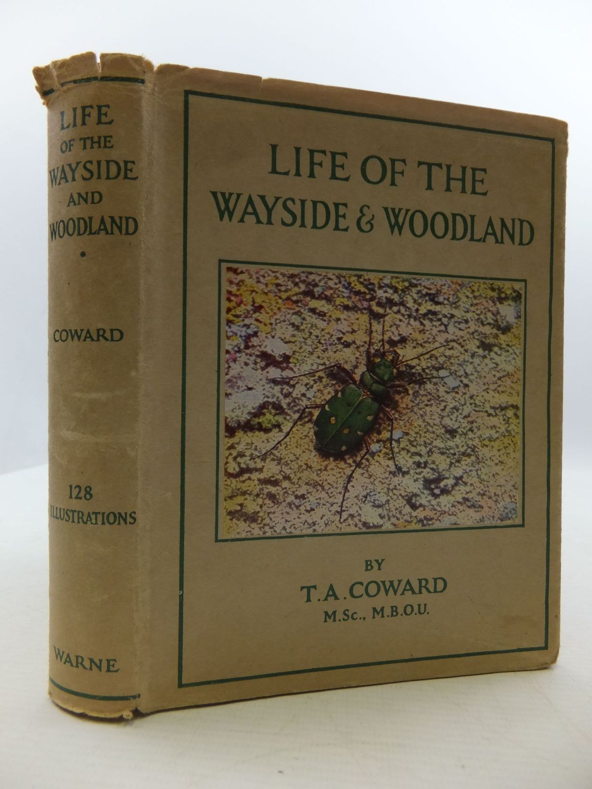 Photo of LIFE OF THE WAYSIDE & WOODLAND written by Coward, T.A. published by Frederick Warne & Co Ltd. (STOCK CODE: 2110353)  for sale by Stella & Rose's Books