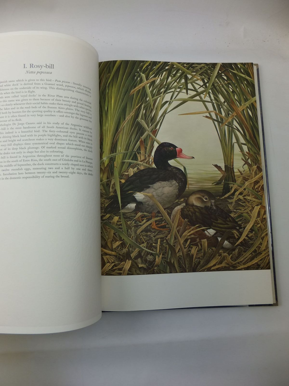 Photo of SOME BIRDS AND MAMMALS OF SOUTH AMERICA written by Sitwell, Sacheverell