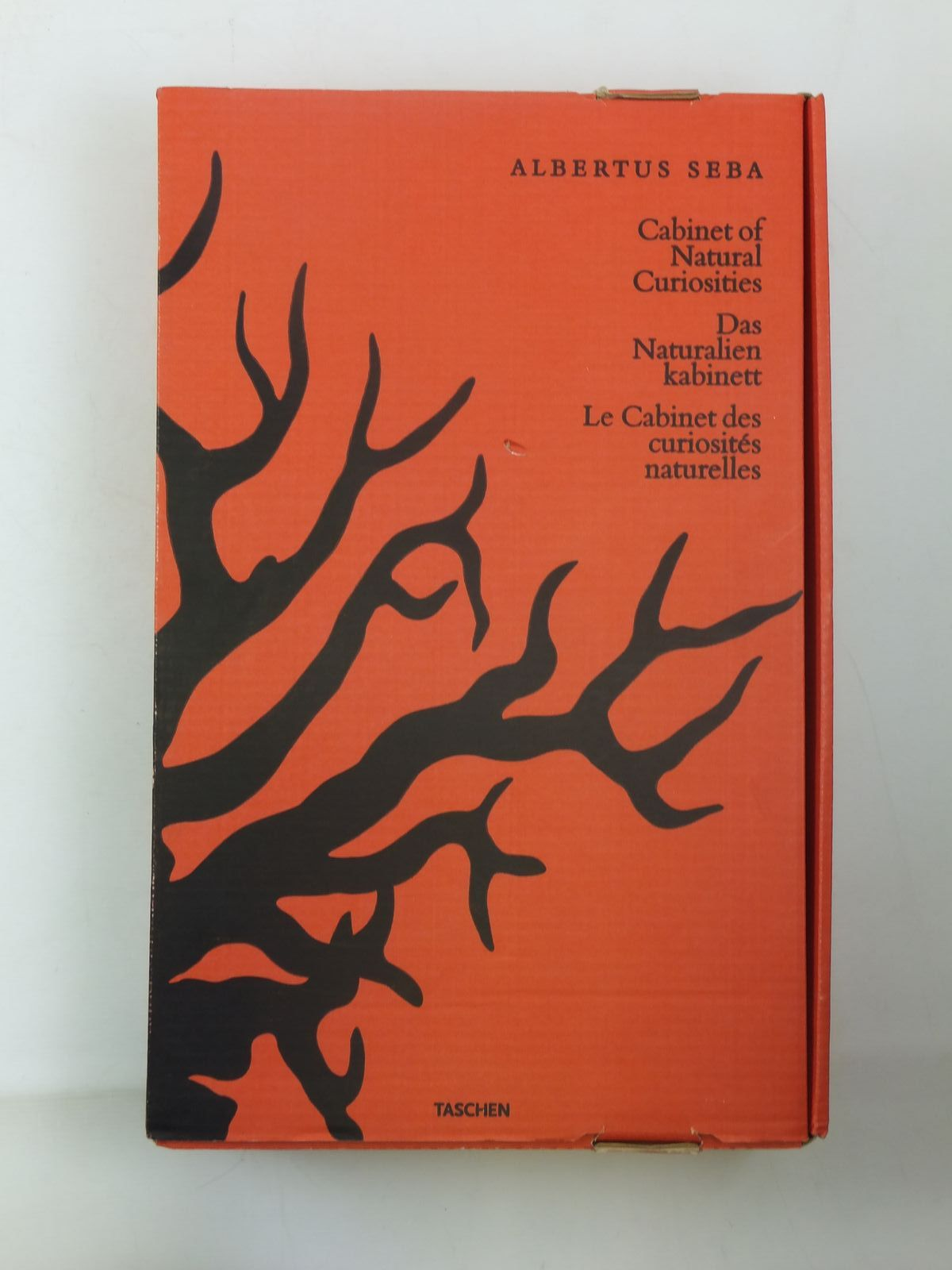 Photo of CABINET OF NATURAL CURIOSITIES- Stock Number: 2111885
