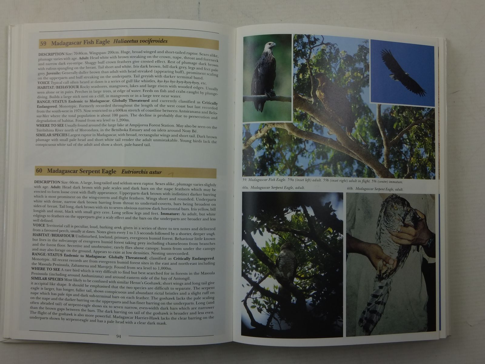 Photo of BIRDS OF MADAGASCAR A PHOTOGRAPHIC GUIDE written by Morris, Pete Hawkins, Frank published by Pica Press (STOCK CODE: 2113827)  for sale by Stella & Rose's Books