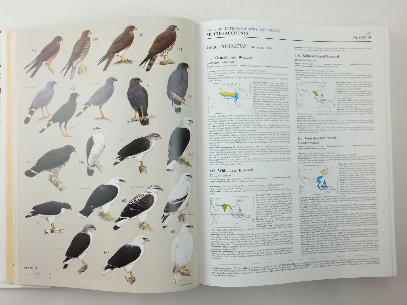 Photo of HANDBOOK OF THE BIRDS OF THE WORLD VOLUME 2: NEW WORLD VULTURES TO GUINEAFOWL written by Del Hoyo, Josep<br />Elliott, Andrew<br />Sargatal, Jordi<br />et al,  illustrated by Jutglar, Francesc<br />Sanz, Lluis<br />et al.,  published by Lynx Edicions (STOCK CODE: 2123527)  for sale by Stella & Rose's Books