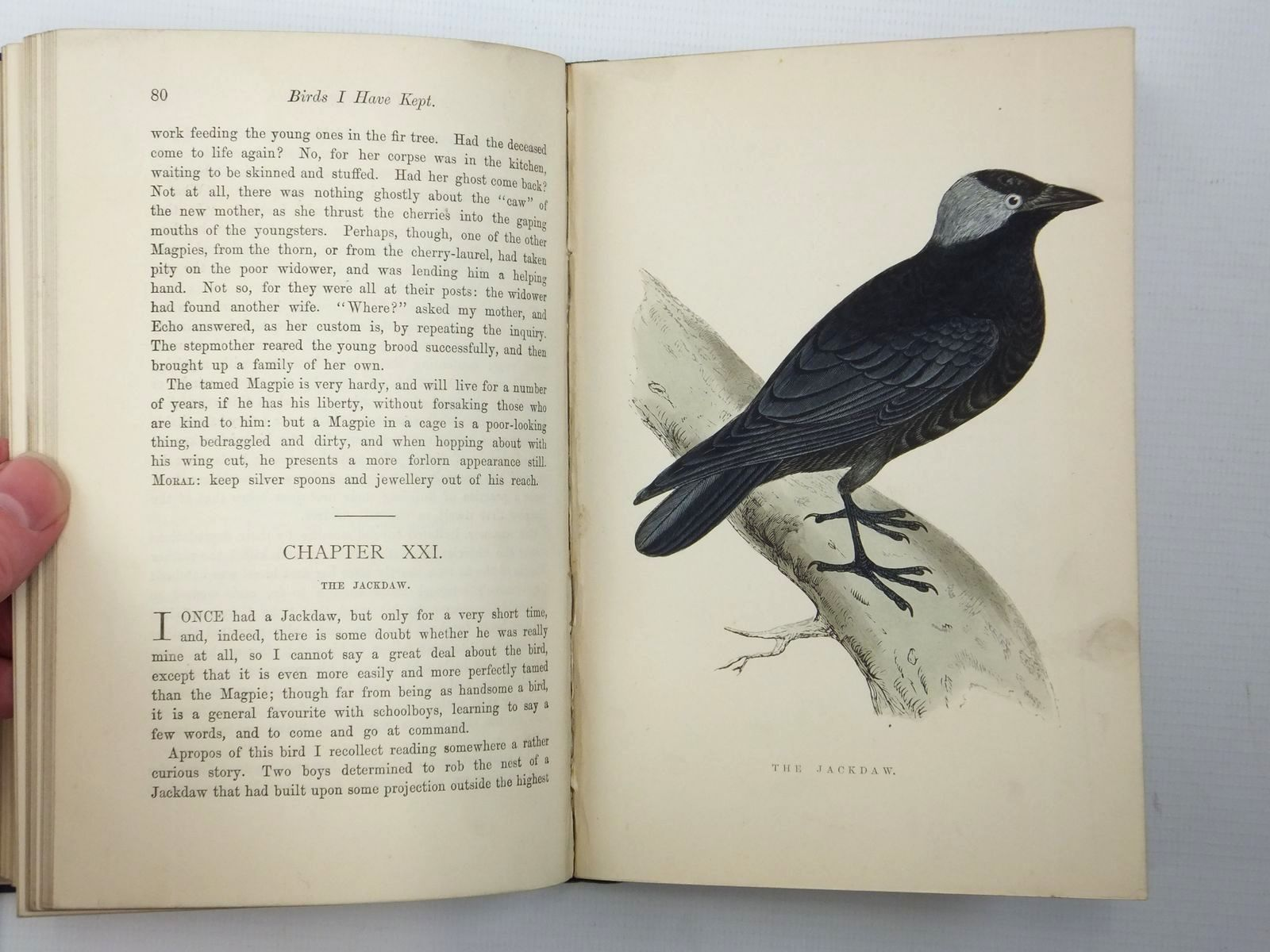 Photo of BIRDS I HAVE KEPT IN YEARS GONE BY written by Greene, W.T. published by L. Upcott Gill (STOCK CODE: 2123638)  for sale by Stella & Rose's Books