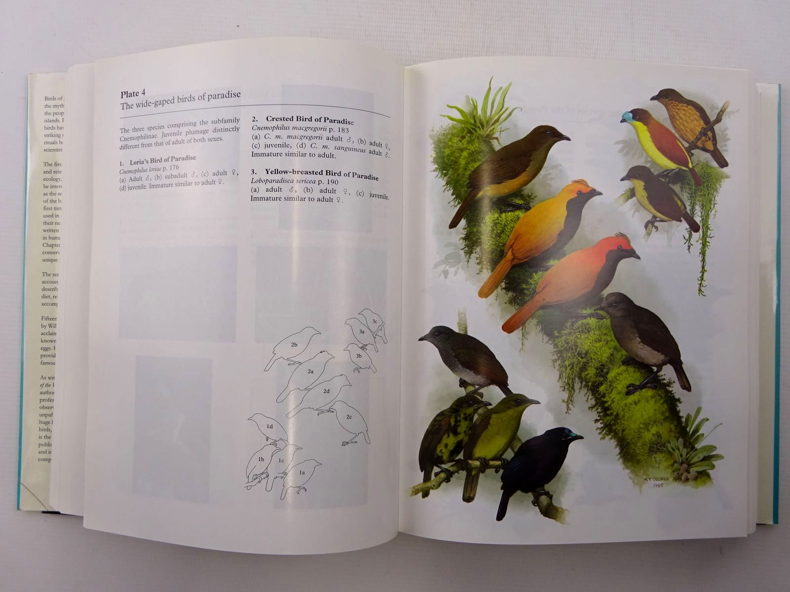 Photo of THE BIRDS OF PARADISE written by Frith, Clifford B.
