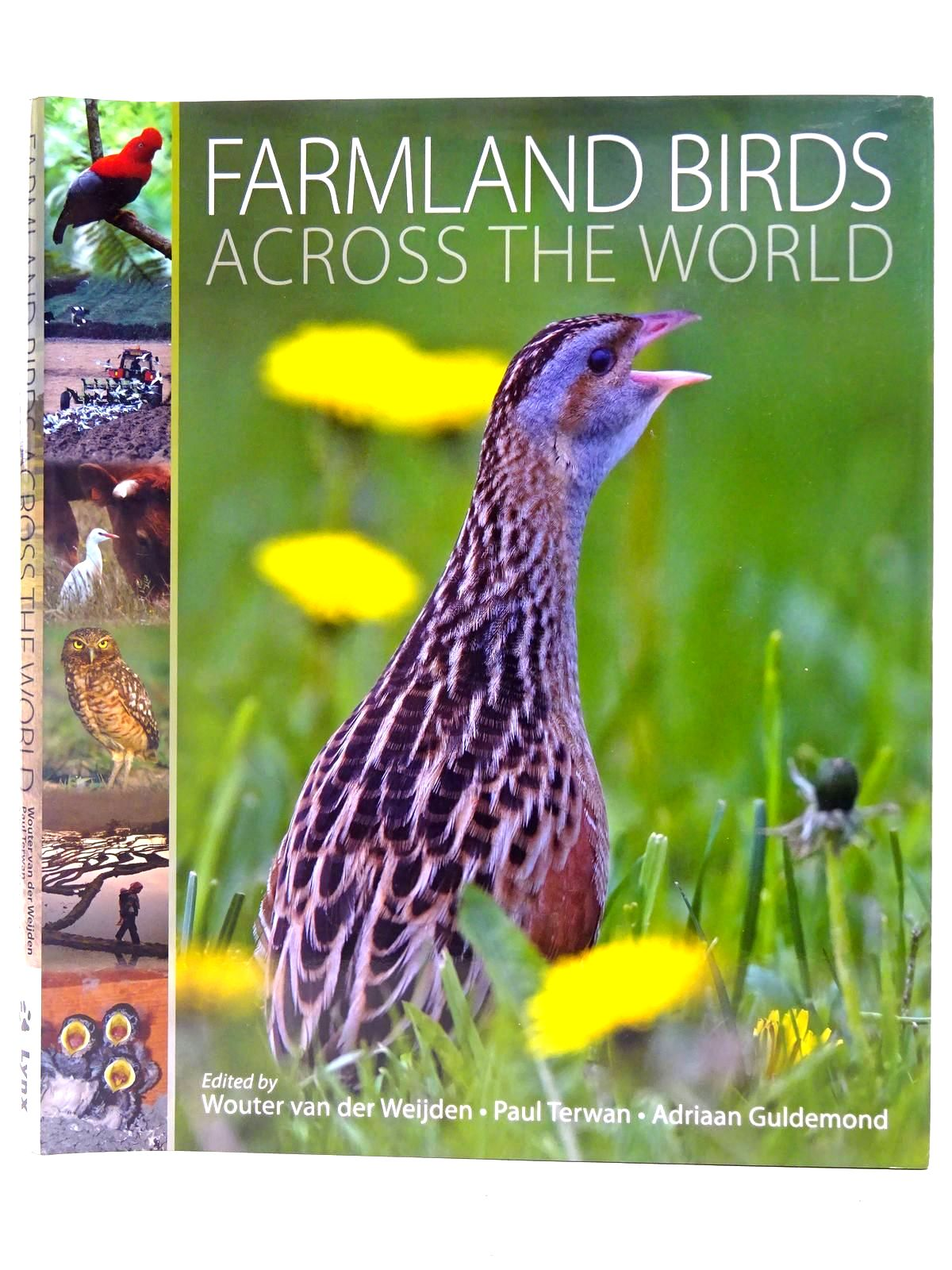 Photo of FARMLAND BIRDS ACROSS THE WORLD- Stock Number: 2127811