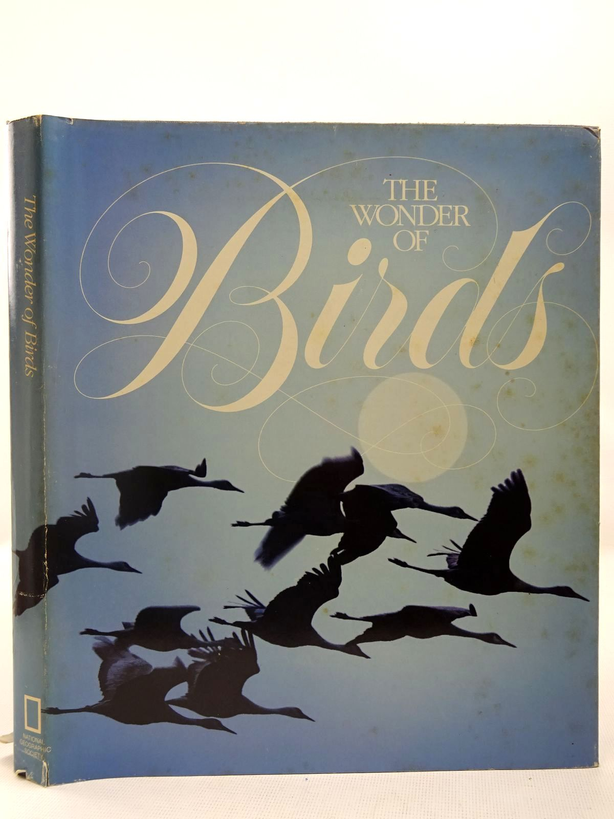 Photo of THE WONDER OF BIRDS- Stock Number: 2127827