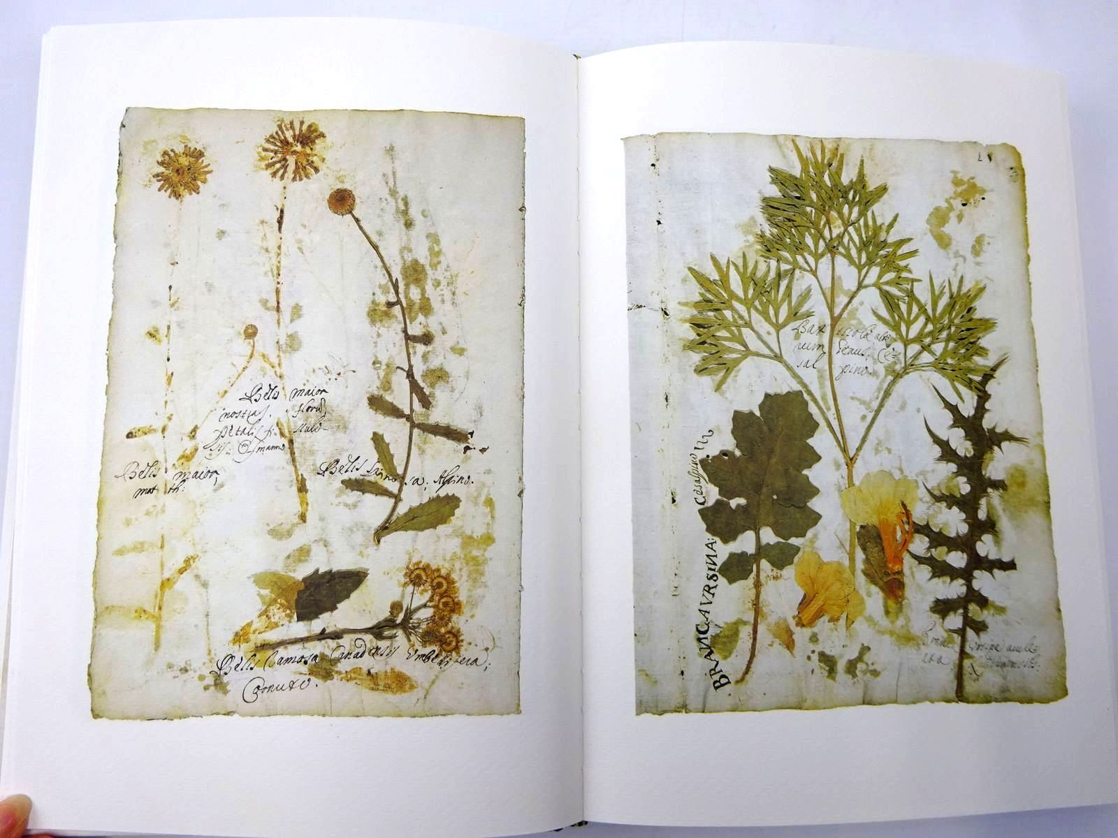 Photo of HERBARIUM HABITUM IN HORTO MEDICO SAPIENTIAE ROMANAE ANNO LUBILEI 1700 published by Antonio Delfino Editore (STOCK CODE: 2130369)  for sale by Stella & Rose's Books