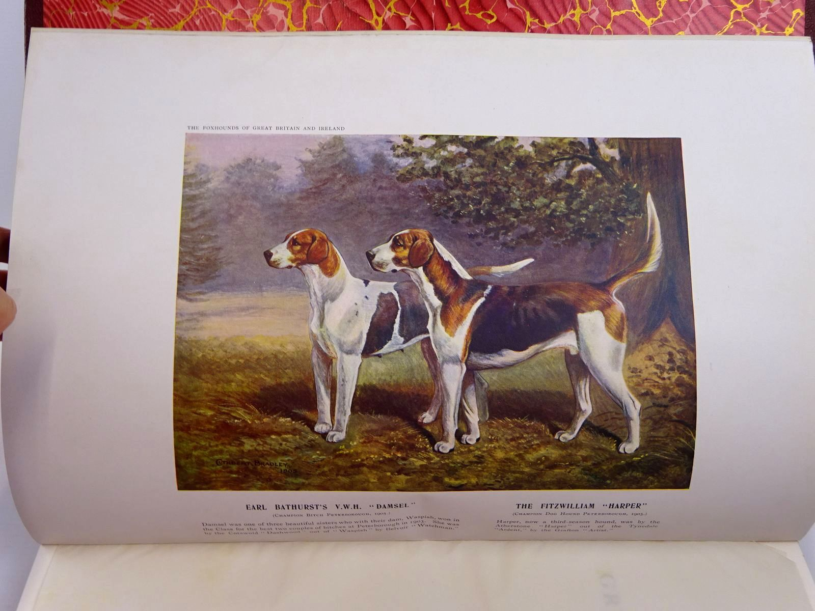 Photo of THE FOXHOUNDS OF GREAT BRITAIN AND IRELAND THEIR MASTERS AND HUNTSMEN written by De Trafford, Humphrey F.<br />et al, illustrated by Bradley, Cuthbert<br />et al., published by Walter Southwood &amp; Company (STOCK CODE: 2130948)  for sale by Stella & Rose's Books