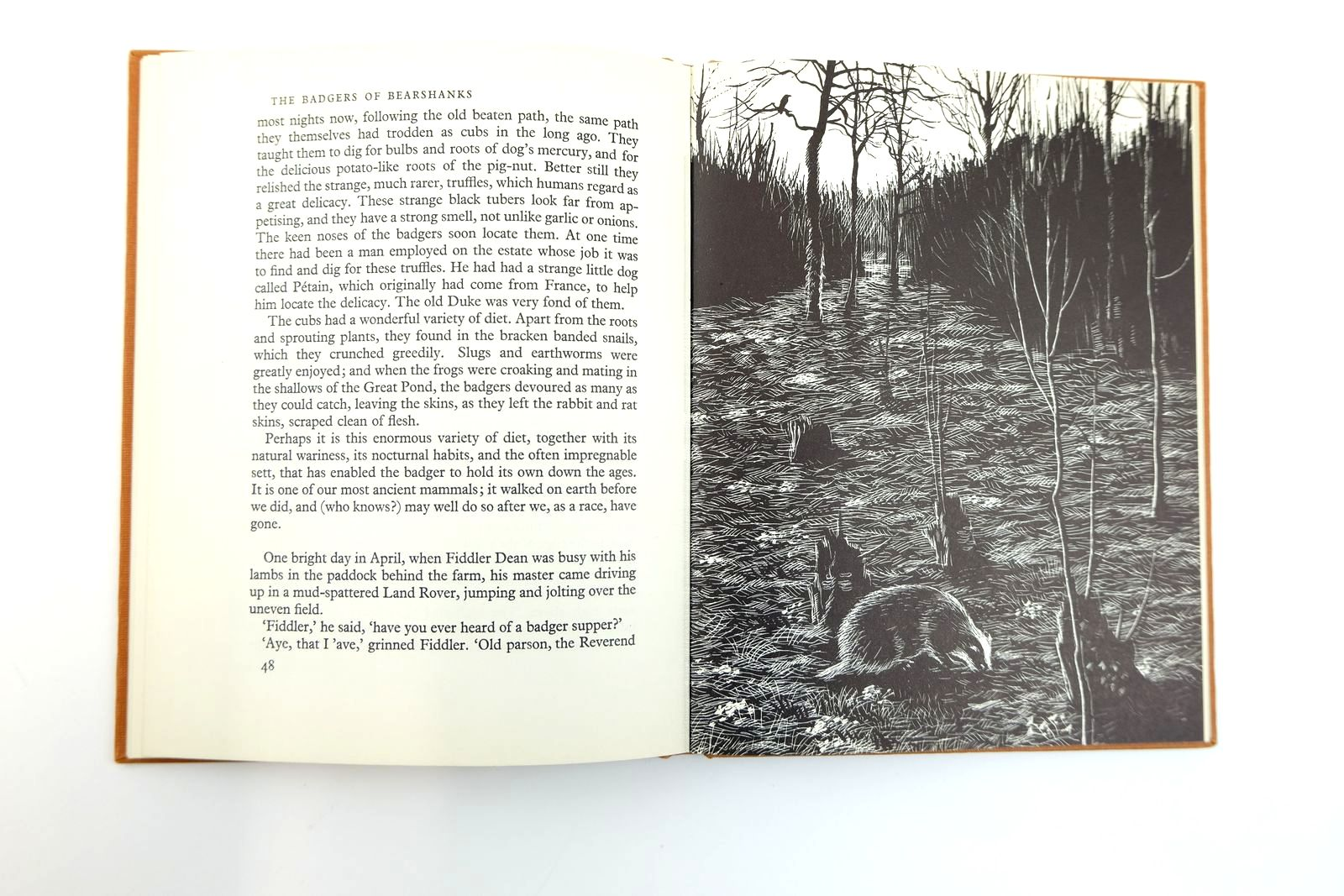 Photo of THE BADGERS OF BEARSHANKS written by BB,  illustrated by BB,  published by Ernest Benn Limited (STOCK CODE: 2131771)  for sale by Stella & Rose's Books