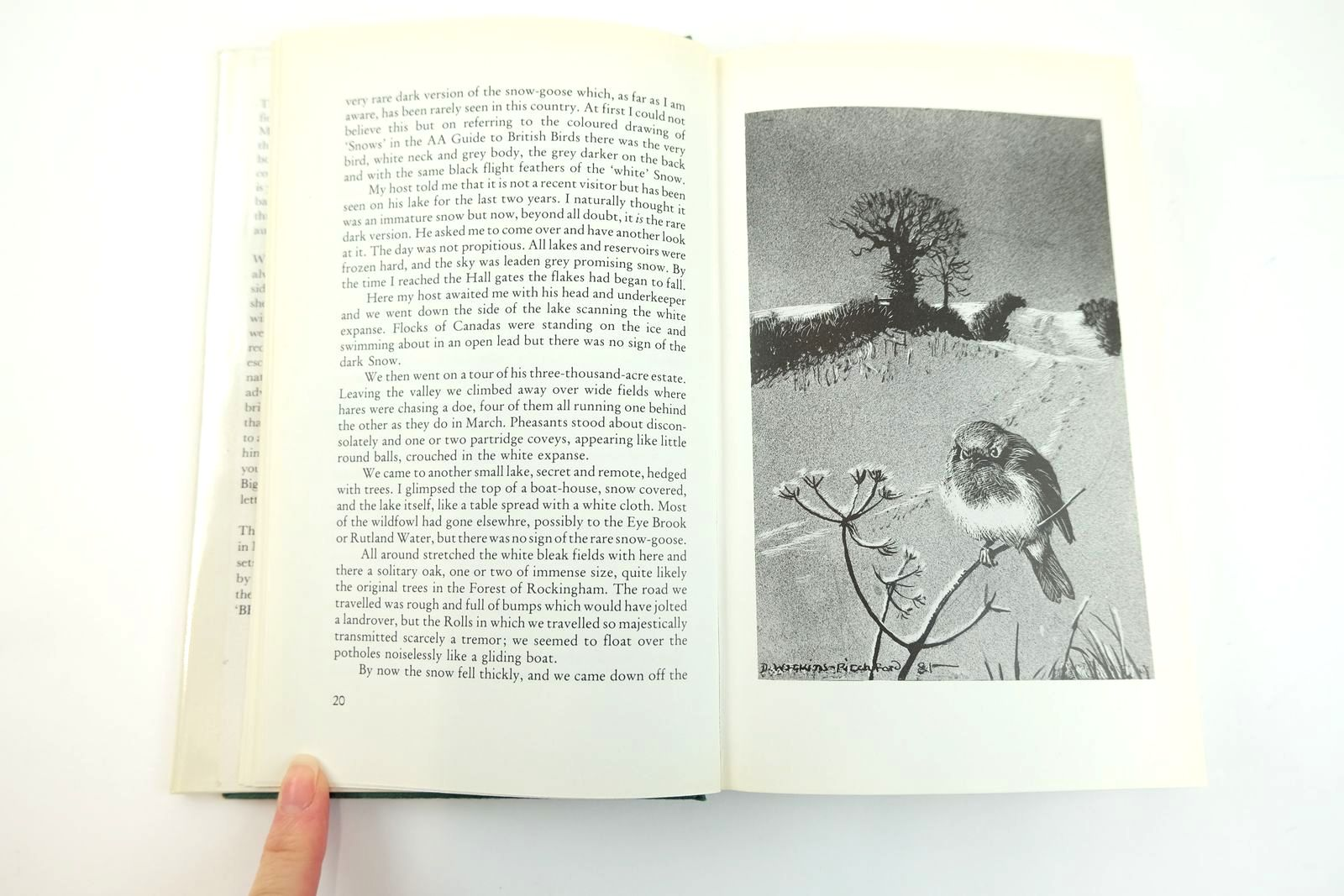 Photo of THE QUIET FIELDS written by BB,  illustrated by BB,  published by Michael Joseph (STOCK CODE: 2131776)  for sale by Stella & Rose's Books