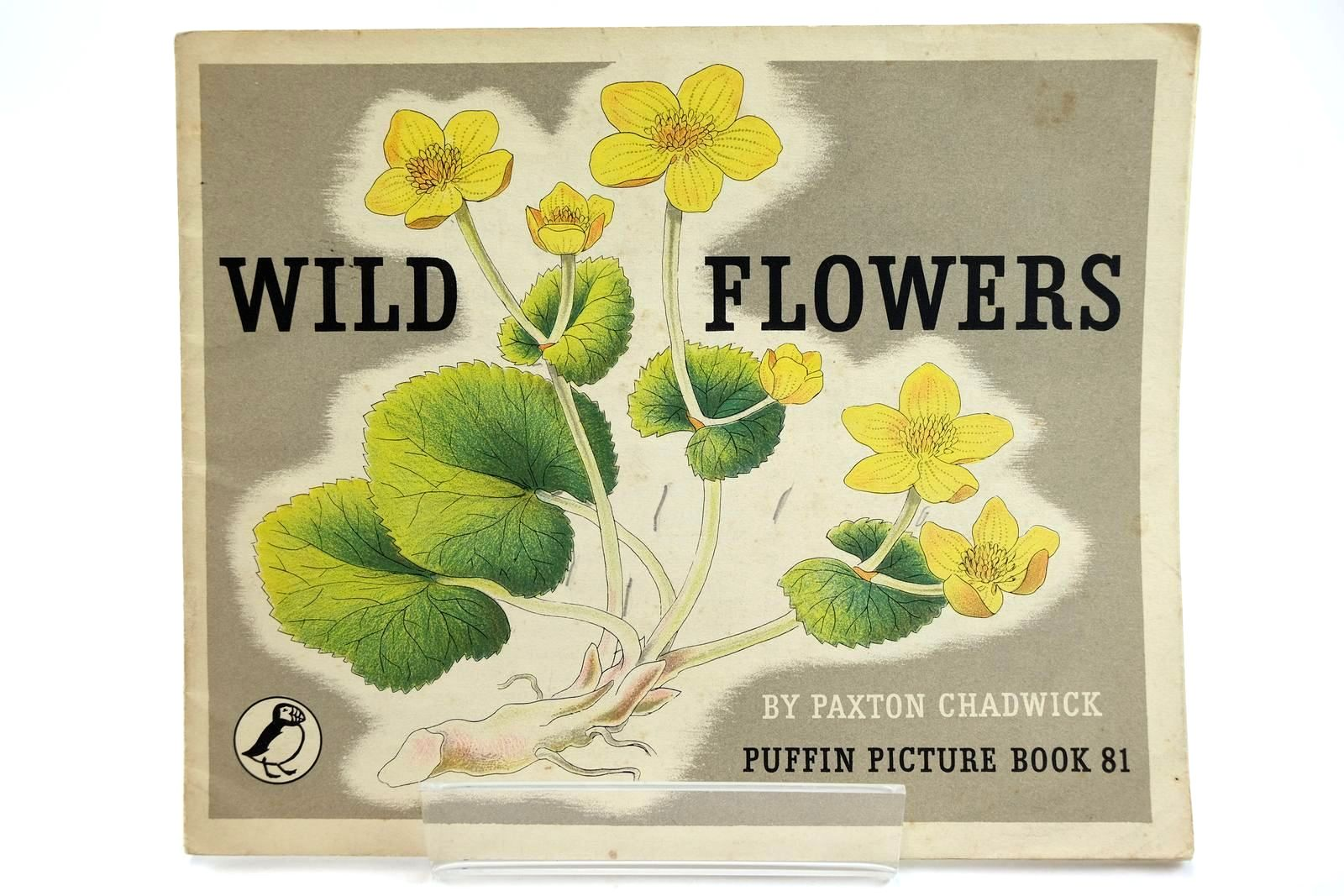 Photo of WILD FLOWERS- Stock Number: 2131936