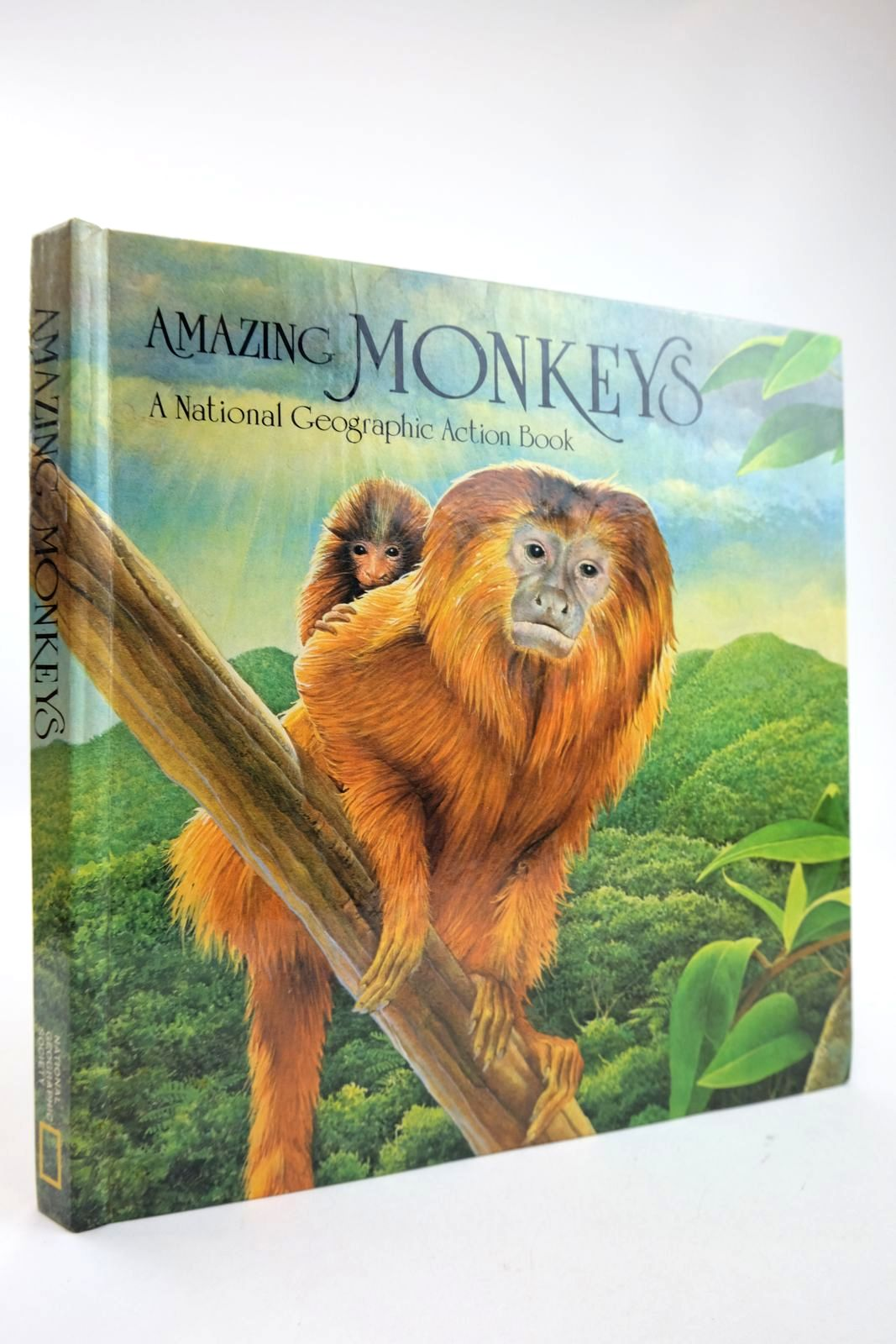 Photo of AMAZING MONKEYS- Stock Number: 2132525