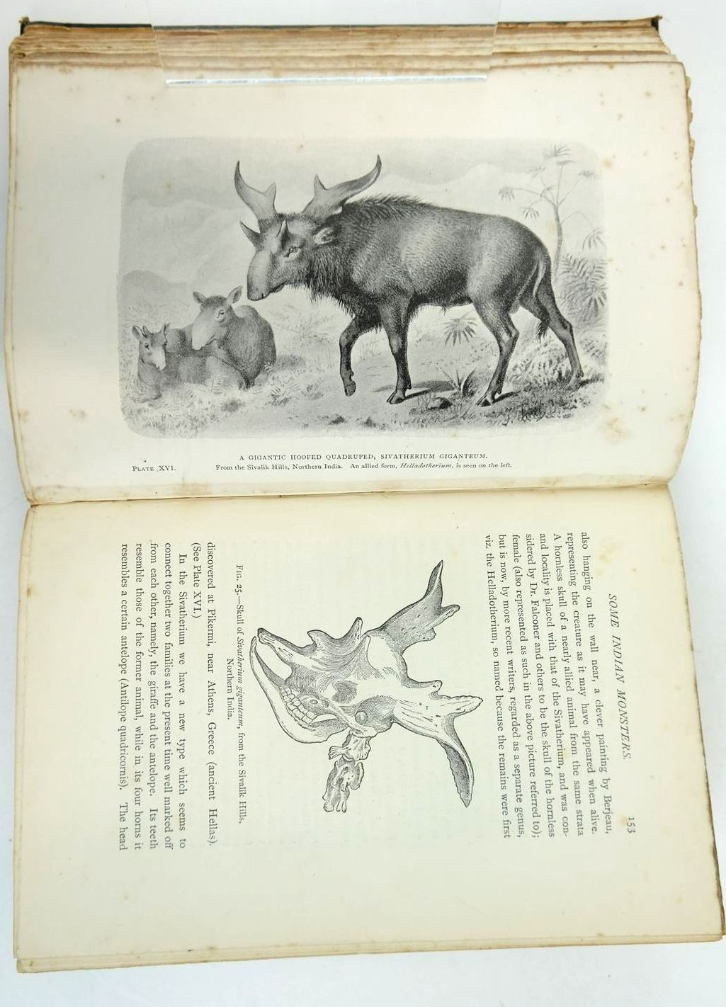 Photo of EXTINCT MONSTERS written by Hutchinson, H.N. illustrated by Smit, J.