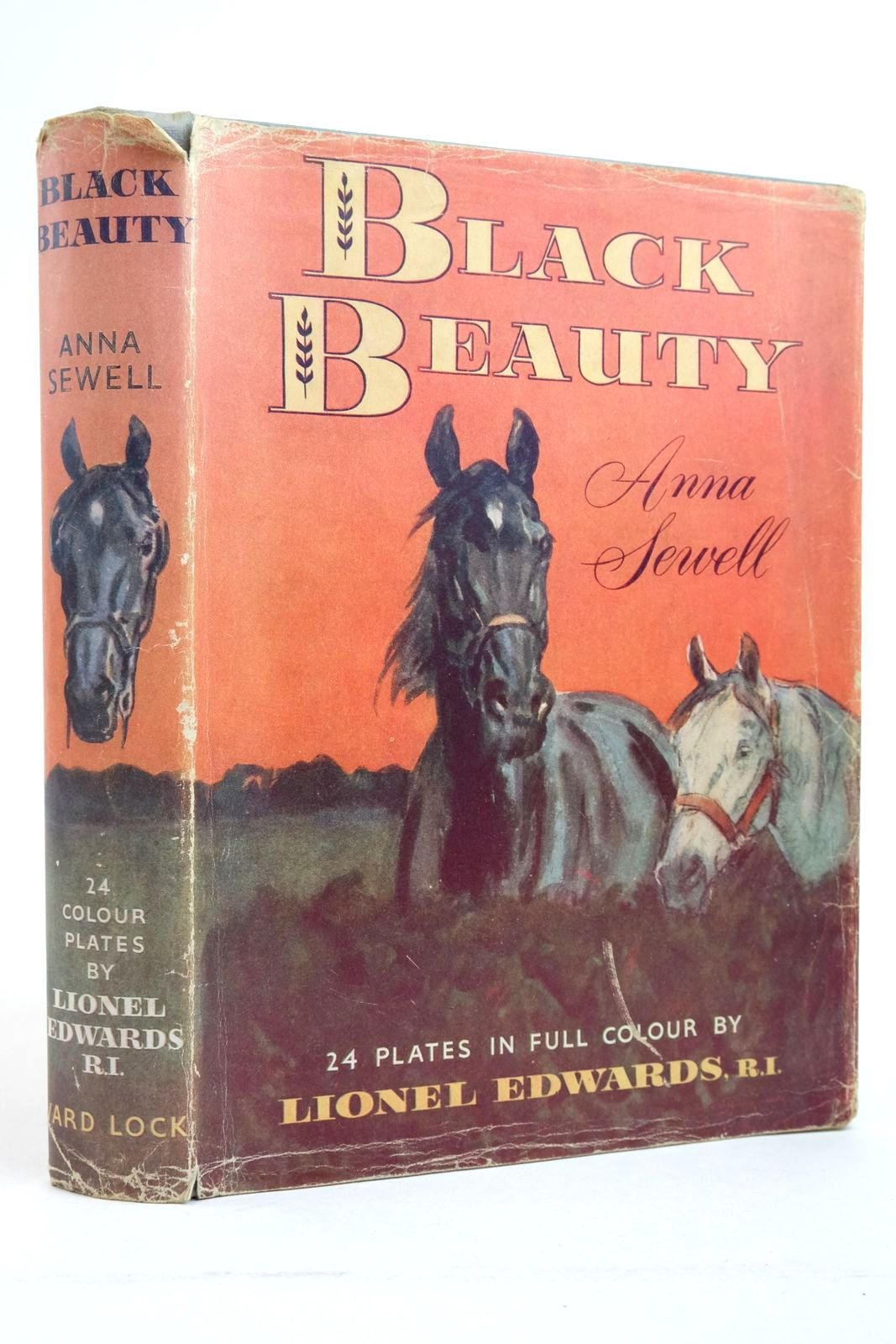 Photo of BLACK BEAUTY- Stock Number: 2135592
