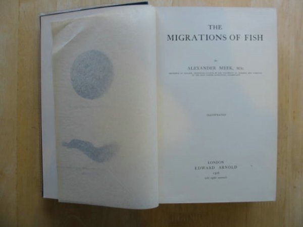 Photo of THE MIGRATIONS OF FISH written by Meek, Alexander published by Edward Arnold (STOCK CODE: 569255)  for sale by Stella & Rose's Books