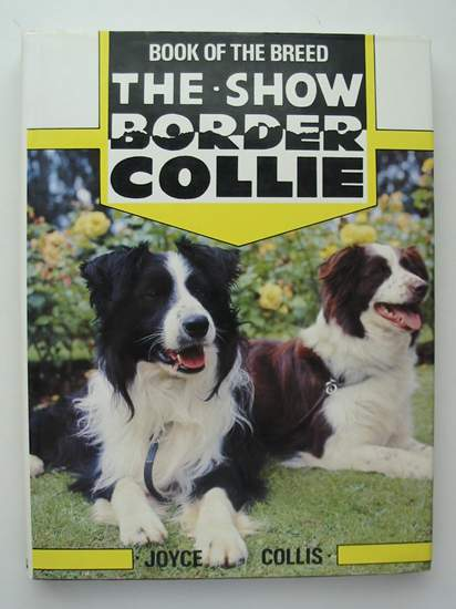 Photo of THE SHOW BORDER COLLIE- Stock Number: 597425
