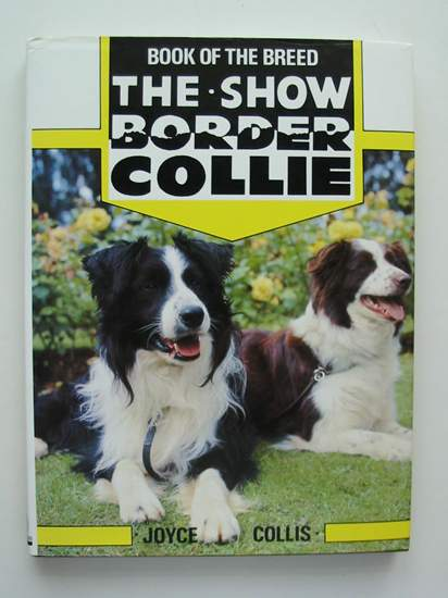 Photo of THE SHOW BORDER COLLIE- Stock Number: 627505