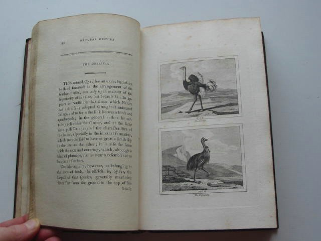Photo of BUFFON'S NATURAL HISTORY OF BIRDS, FISH, INSECTS, AND REPTILES (5 VOLS) written by Buffon, Comte De published by H.D. Symonds (STOCK CODE: 819573)  for sale by Stella & Rose's Books