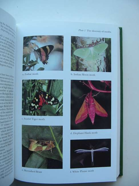 Photo of MOTHS (NN 90) written by Majerus, Michael E.N. published by Harper Collins (STOCK CODE: 820156)  for sale by Stella & Rose's Books