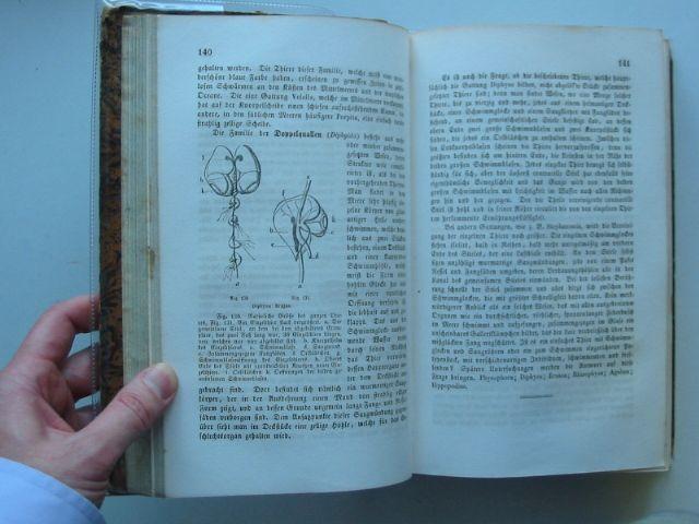Photo of NATURGESCHICHTE DER LEBENDEN UND UNTERGEGANGENEN THIERE written by Vogt, Carl published by Literarische Unstalt (STOCK CODE: 987624)  for sale by Stella & Rose's Books